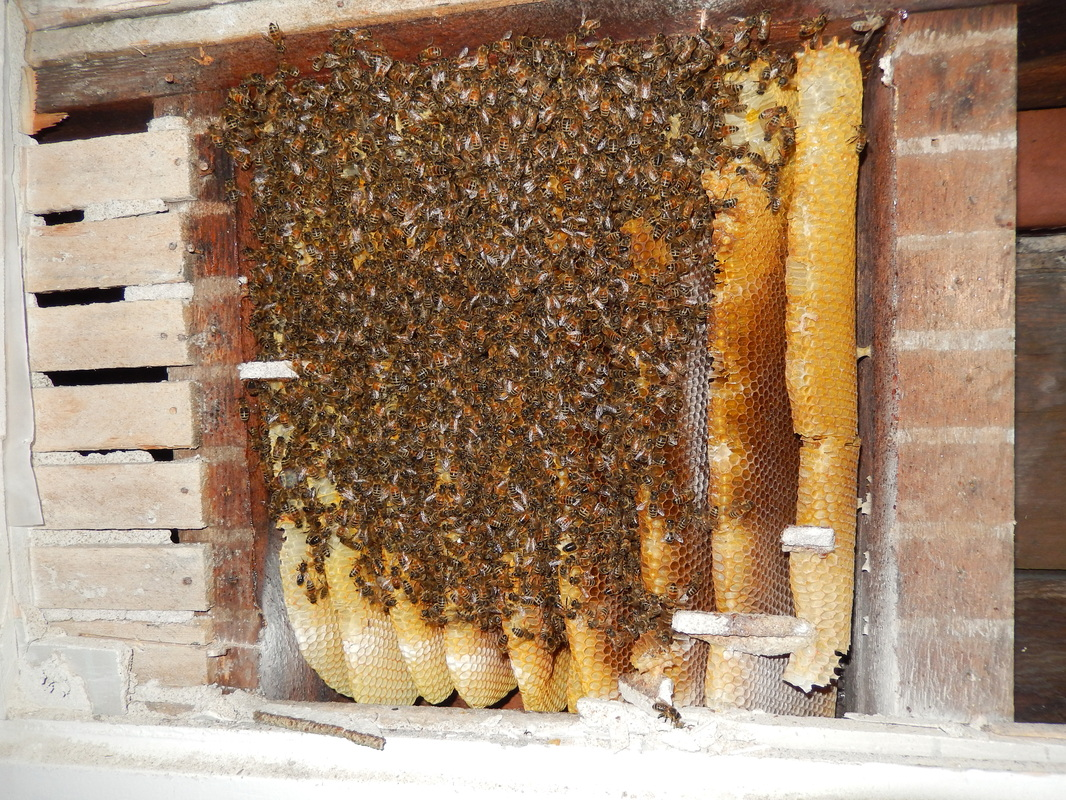 Blog Archives - Superior Beekeeping Club
